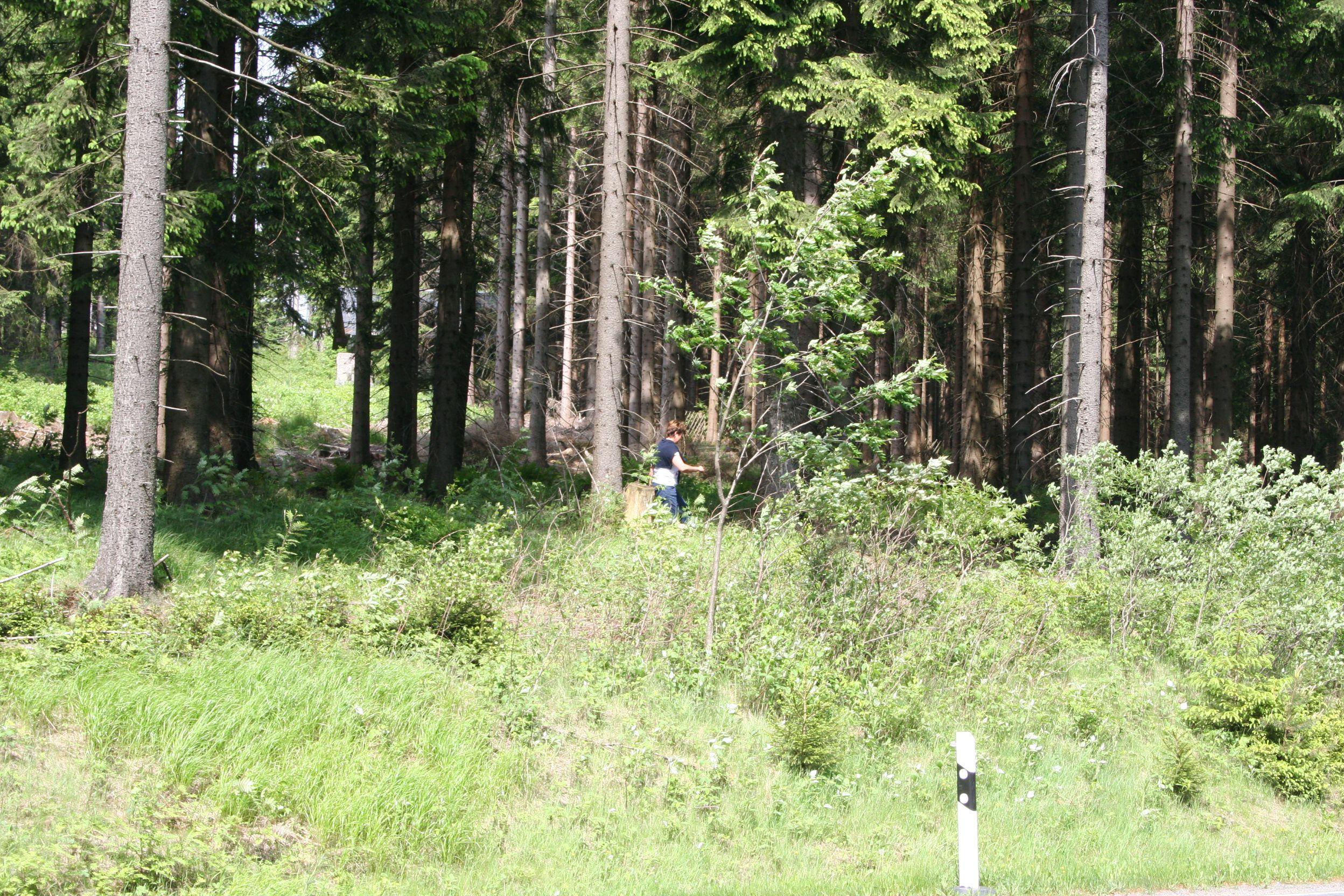 Rotkäppchen hat sich im Wald verirrt.